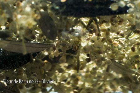 FilmFdB_montage.00_14_02_24.Still005.jpg